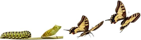 baco farfalla
